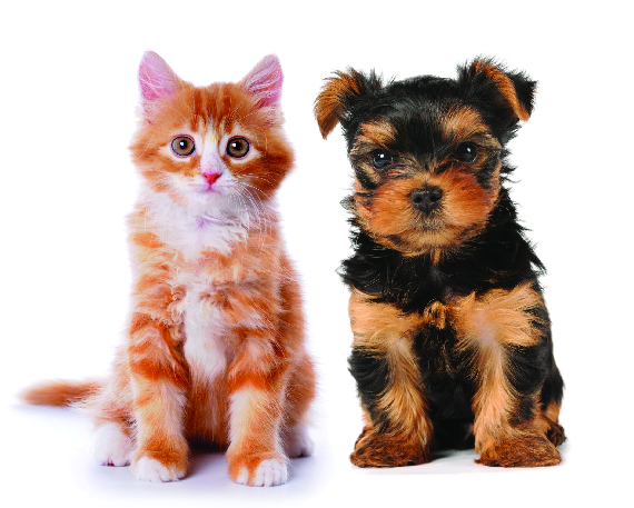 cat care dog care puppy care kitten care