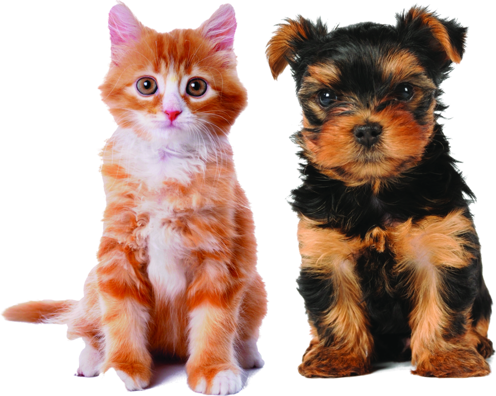 Check out the veterinary insurance plans for your fur-baby.