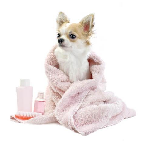 mobile dog grooming, birmingham
