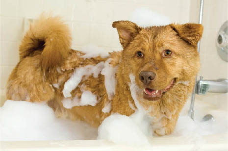 dog wash coupons near me pet wash coupons near me dog bath coupons near me