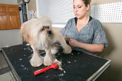 careful fur trimming and styling; dog grooming; cat nail trims