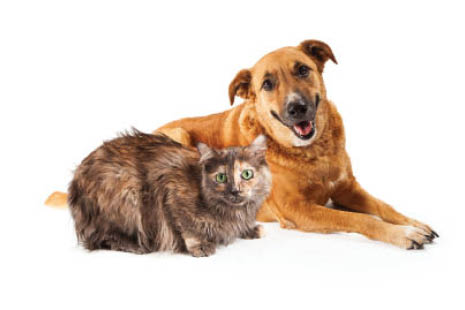Opening Homes and Hearts to Homeless Pets in San Luis Obispo County since 1955.