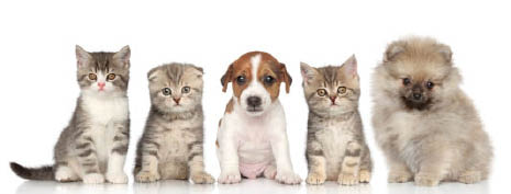 kitten care cat care kitten kittens cat cats senior kitty senior cat puppy care dog care adult dog care
