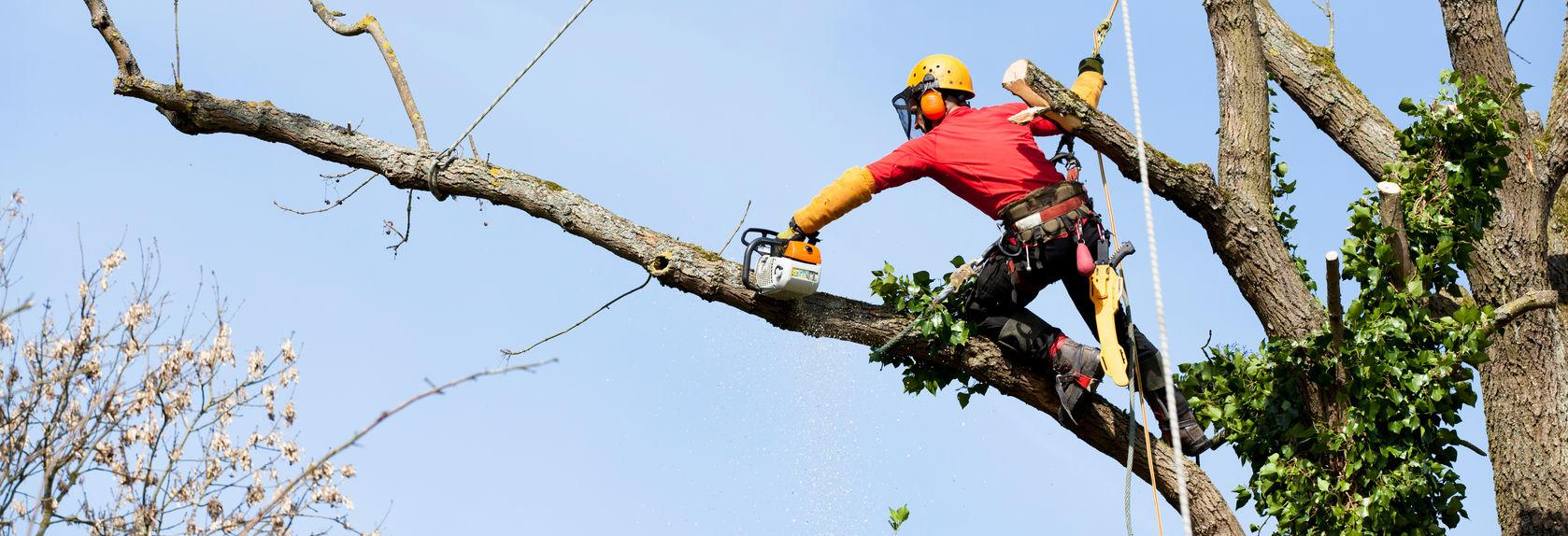 Malcarne Tree Service in Rhinebeck, NY banner