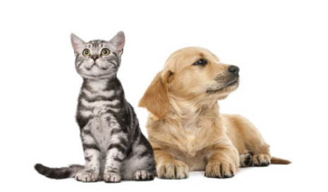 Veterinary clinic and pet care services