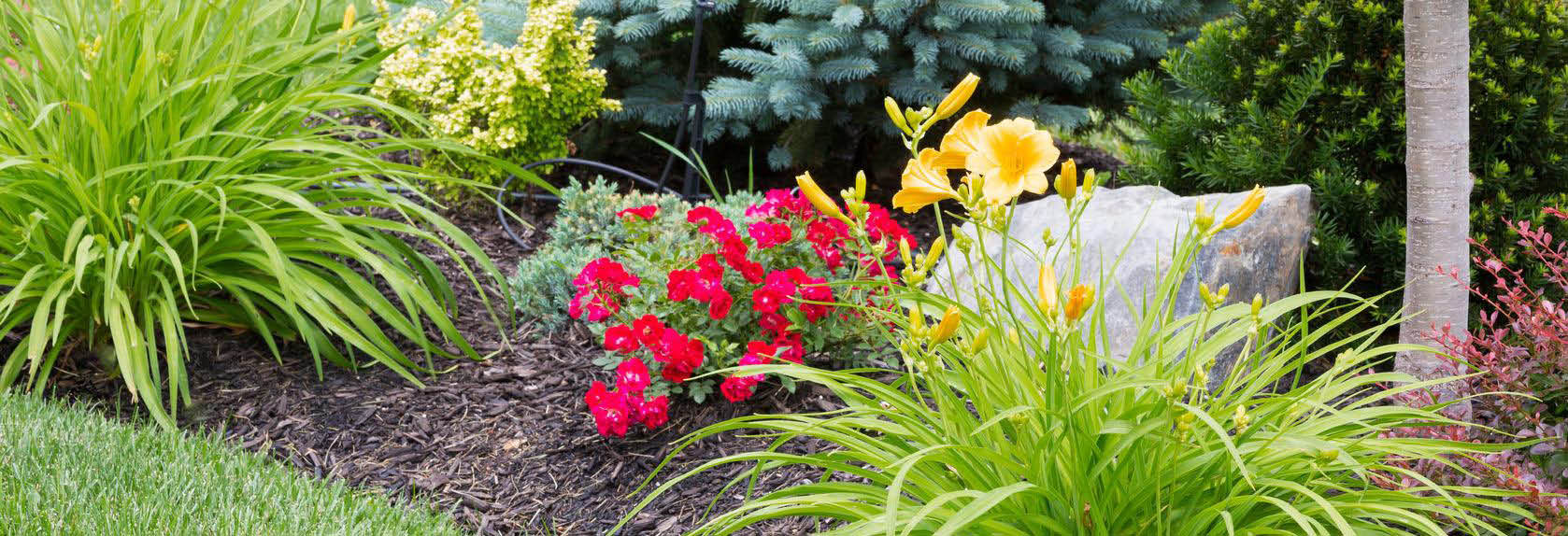 rainbow landscaping orange county ca landscaping coupons near me