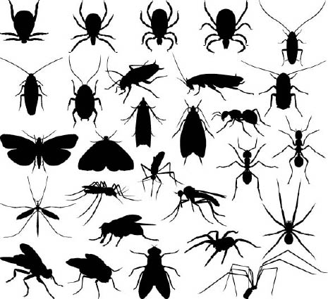 variety of insects and pests
