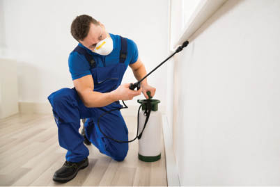 pest control coupons near me rodent control coupons near me termite control coupons near me