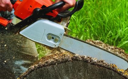 Chain saw tree cutting