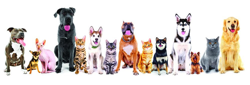 Vet care for your cat or dog