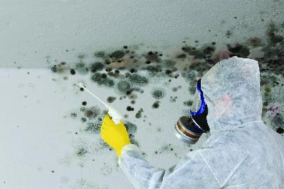 Black mold remediation