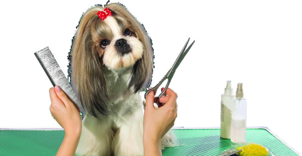 dog grooming fairview park ohio