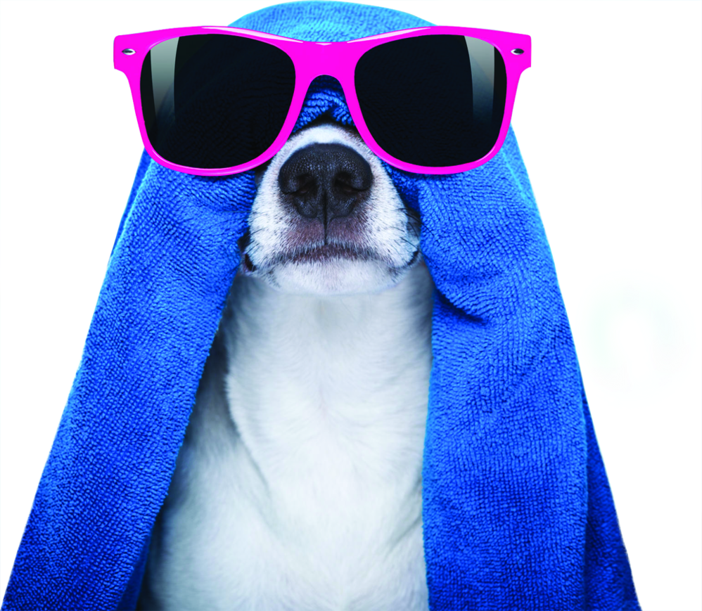 puppy relaxing with towel and sunglasses