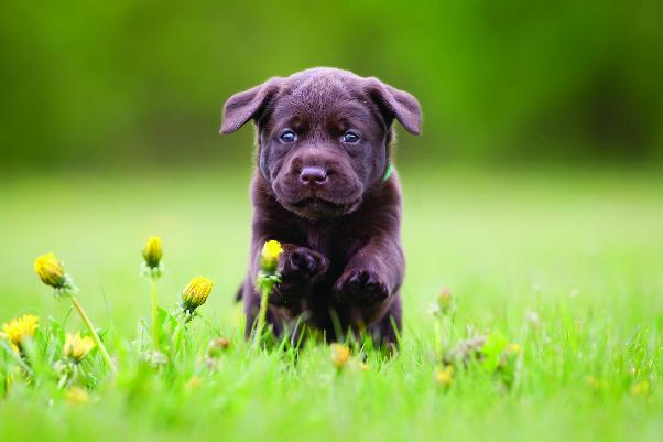 Puppy running through field