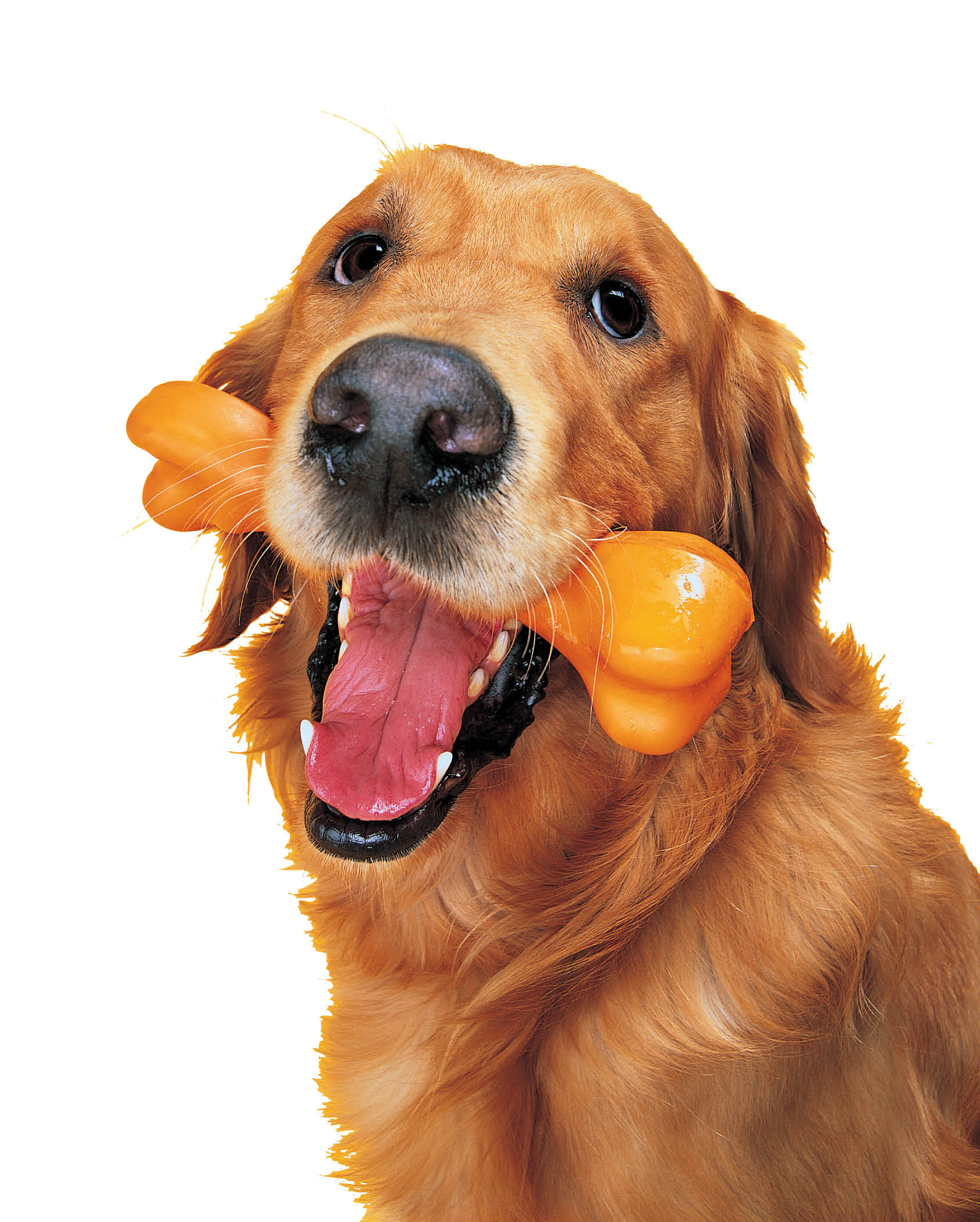 Your pet's good health depends on your love and proper veterinary care at The Animal Clinic in Santa Clara, CA