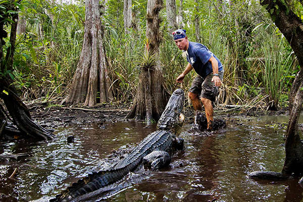 We operate an alligator rescue in Broward County