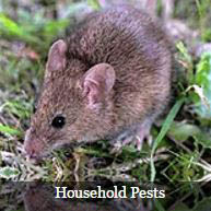 This pest control company will also exterminate mice and rats.