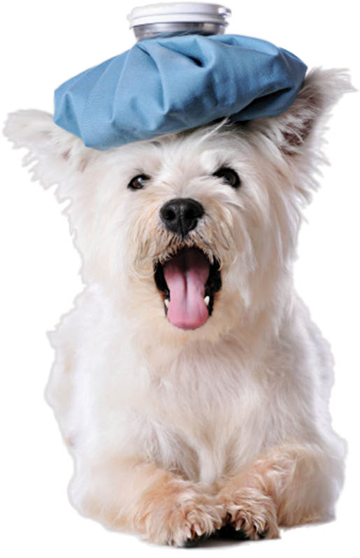 SEVEN OAKS PET HOSPITAL, LUTZ, FL