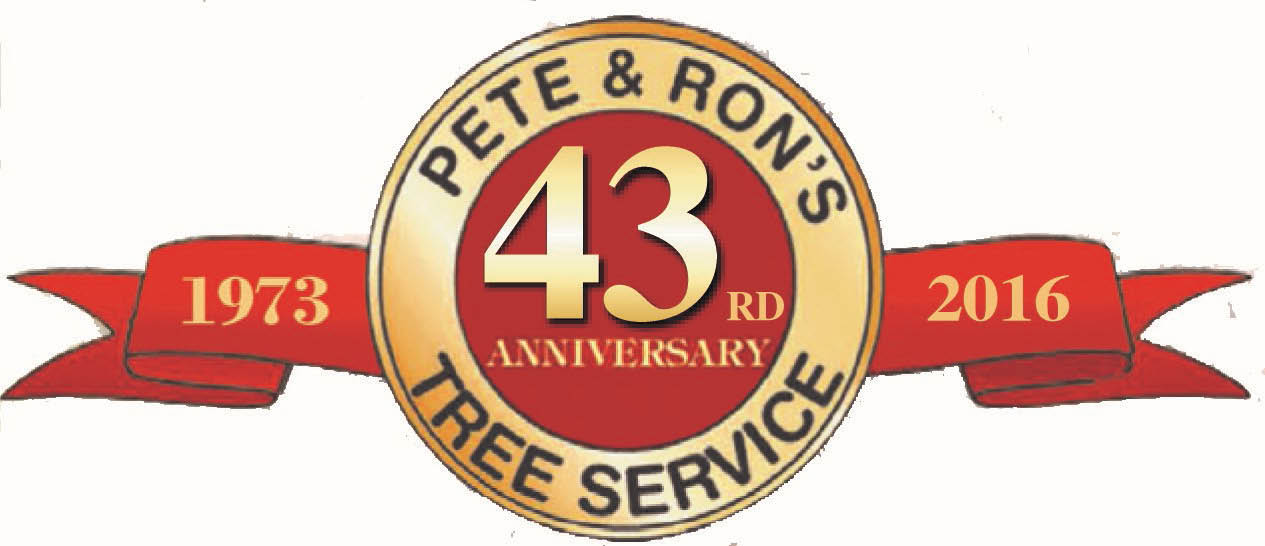 Tampa Bay tree services  Pete & Ron's 43 years tree services in Tampa