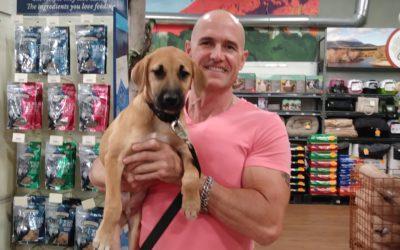 pets plus,pet care,pet adoption,dogs,cats,adoption,pet adoption,