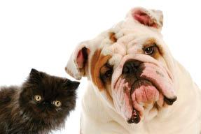Get pet supplies near Glendale