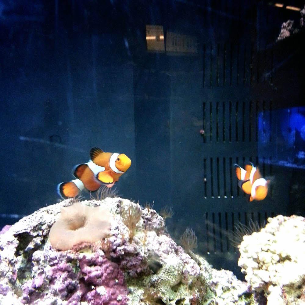 Polly's Pet Shop Aquarium Image