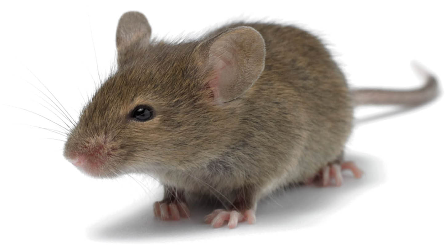 Rodent control provided by Precision Outdoor Services in Sussex County NJ