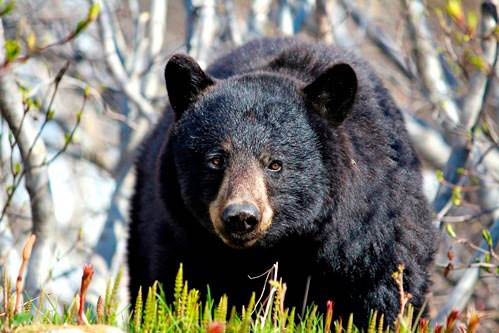 Princess Lodges wildlife in Alaska