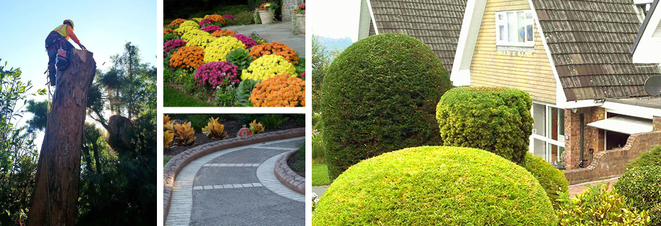 Prodigy Works of the East Bay Tree Service and Landscaping banner ad