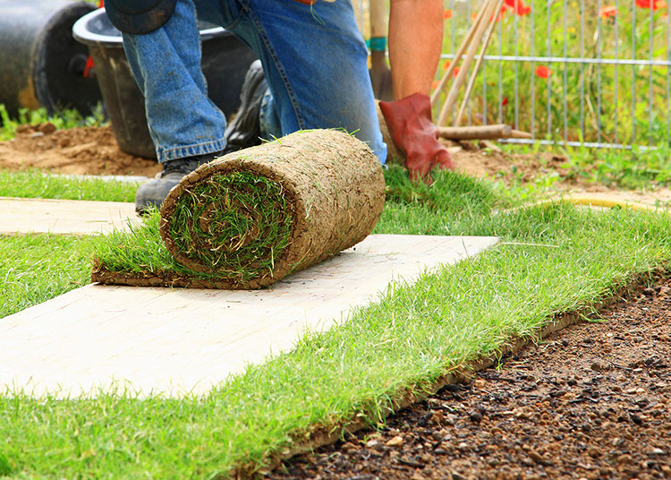 Sod installation and landscape design in Walnut Creek