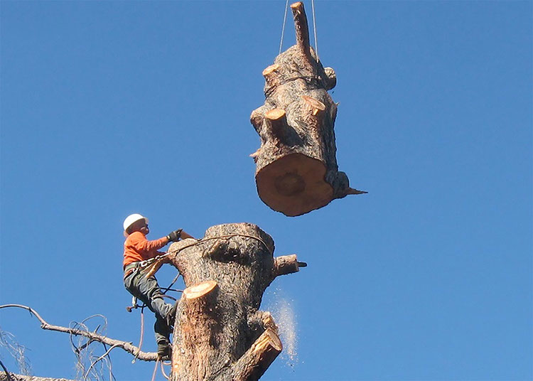 Get tree service in San Ramon