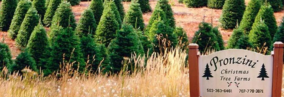 Pronzini Christmas Tree Farms - Petaluma banner