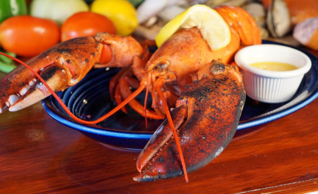 Live maine lobster near Forest City, FL