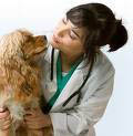 Red Mountain Animal Hospital, Mesa, AZ, health, training