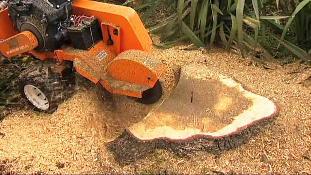 B & K Tree Service performs stump grinding