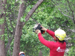 You can trust our certified tree care safety professionals with your property's trees.