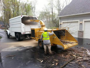 For 13 years, we've been your preferred choice for tree services.