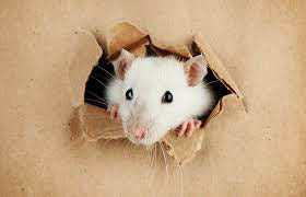 Rodent-Control-
