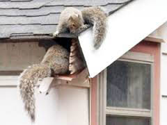 Rodent-Proofing