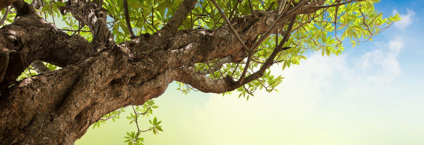 Ron's Stump Removal & Tree Service, LLC main banner image - Tenino, WA