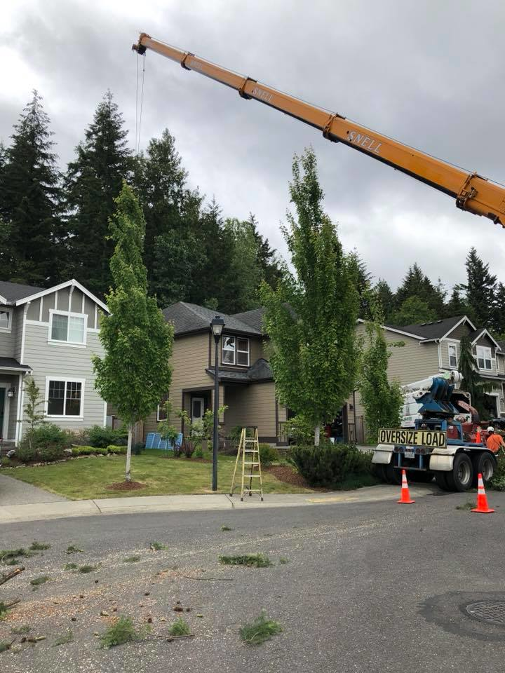 Ron's Stump Removal & Tree Service - Olympia, WA - Tenino, WA - hazardous tree removal - tree service coupons near me - Olympia tree service companies