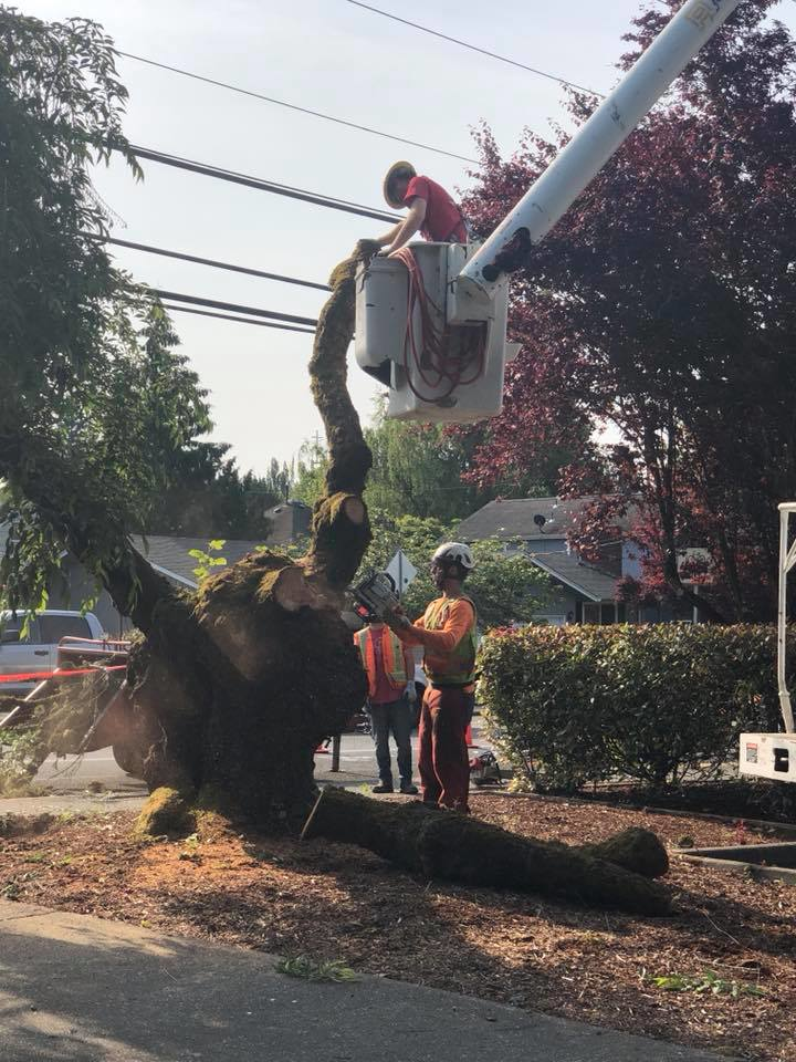Trust the experts from Ron's Stump Removal & Tree Service professional tree service company in Olympia, WA - Tenino, WA - tree removal services - tree removal coupons - tree service coupons
