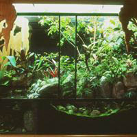 aquariums, vivariums, ponds, waterfalls by Secret Environments in California