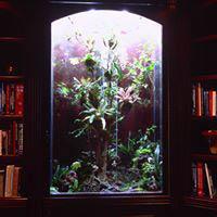 exotic pet habitats; plant walls; plant displays; habitat designers CA