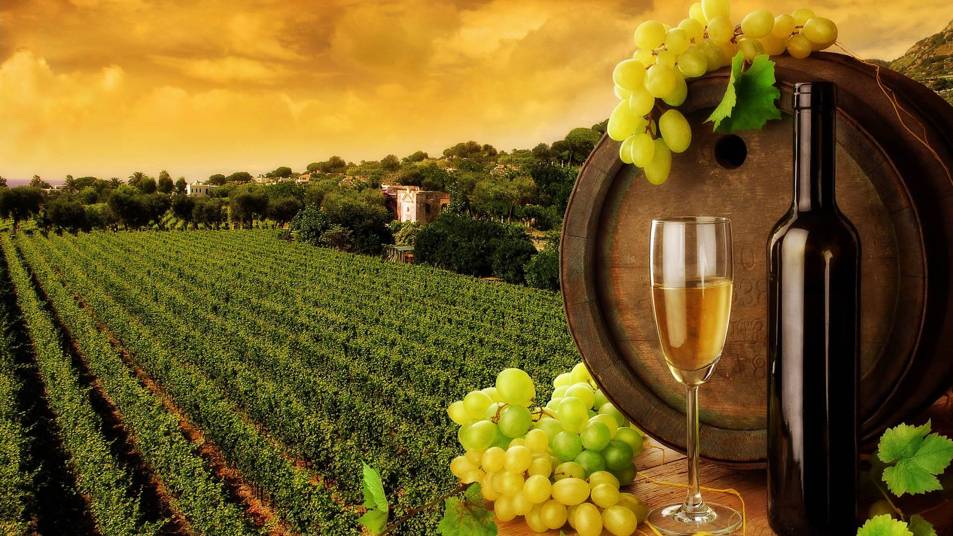 Try a private tour of Napa with About a Shout