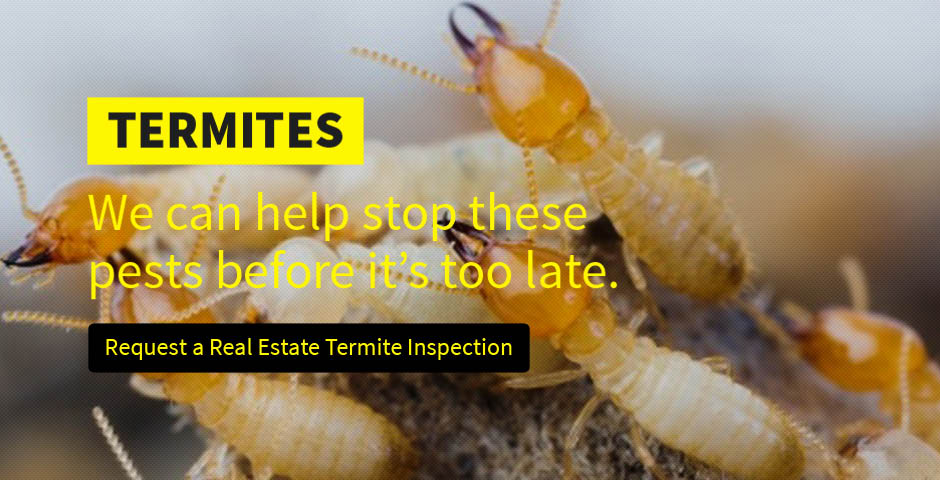 pest control for bed bugs,exterminator pest control,pest killer how do you get rid of bed bugs,insect extermination home,Pest Control,Termite Control, Animal Control, Wildlife Control, Termite And Pest Control