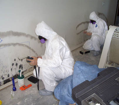 Mold Remediation.