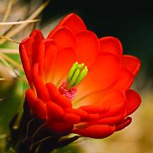 santa ana garden center bernalillo flower