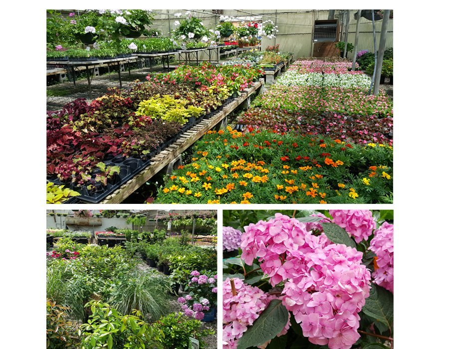 Best Selection of Plants and Flowers in Marietta, GA