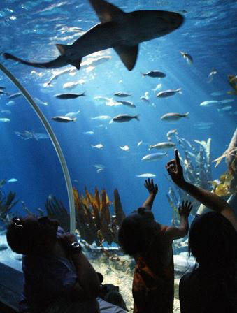 photo of children looking up at shark at Sea Life Michigan Aquarium at Great Lakes Crossing Outlets in Auburn Hills, MI